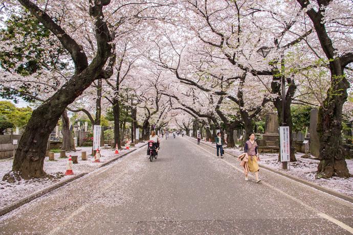 japan-tokyo-tokio-yanaka-sakura-dori